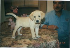 Cory as a puppy